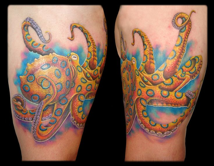 blue ringed octopus tattoo by andrew sussman stretched n inked pinterest blue. Black Bedroom Furniture Sets. Home Design Ideas