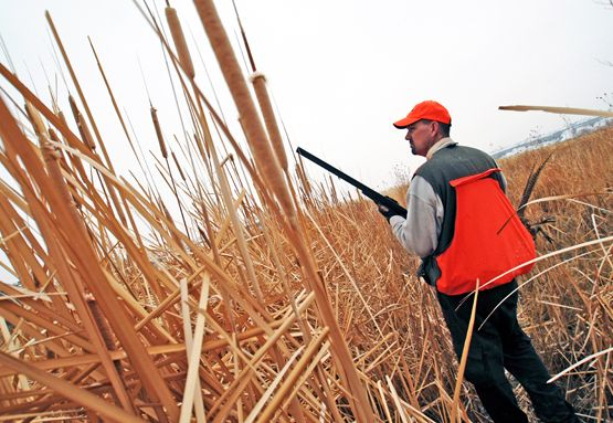 Upland Bird Hunting Tips: How to Find More Birds in ...