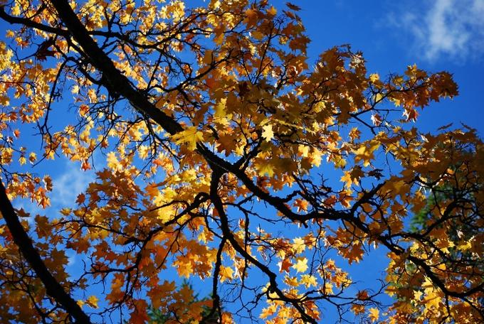 Autumn leaves  (Photo: Kajsa Snickars)