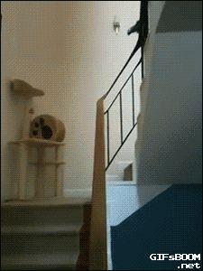 Parrot sliding. Haha,