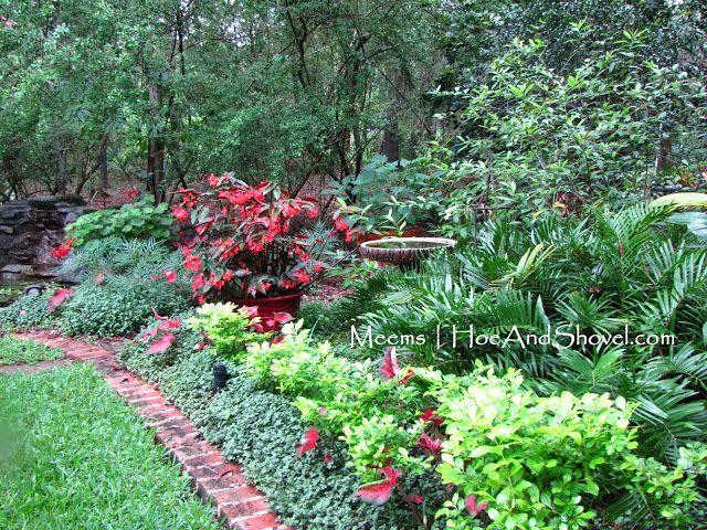 Hoe and shovel central florida garden blog the potting for Trees garden of jane delawney blogspot