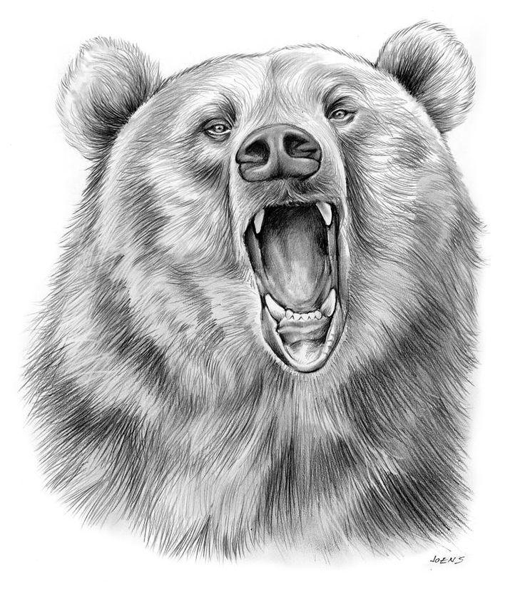 домашних рисунки медведя карандашом почитал