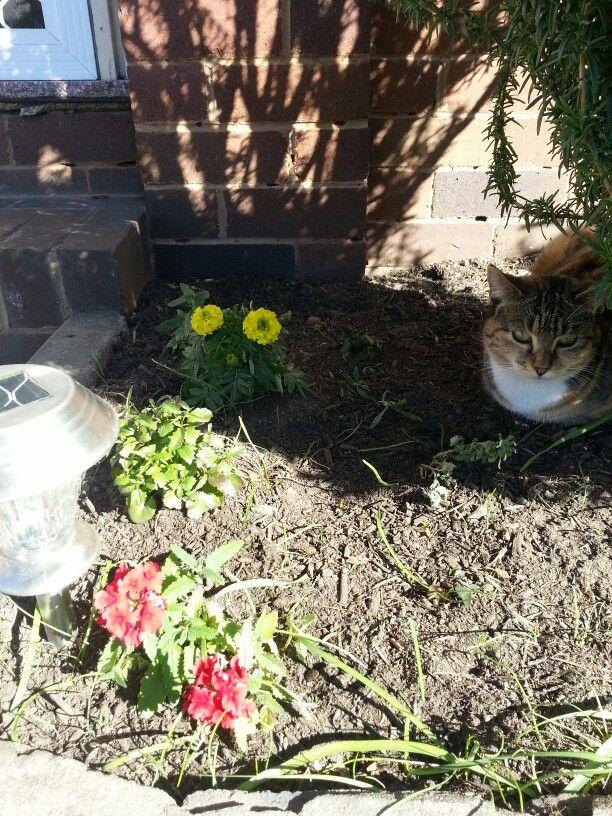 Red verbena,  chrysanthemum, rosemary and cat
