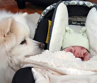 Bringing home a baby? How to get your dog ready. At some point maybe ill need this