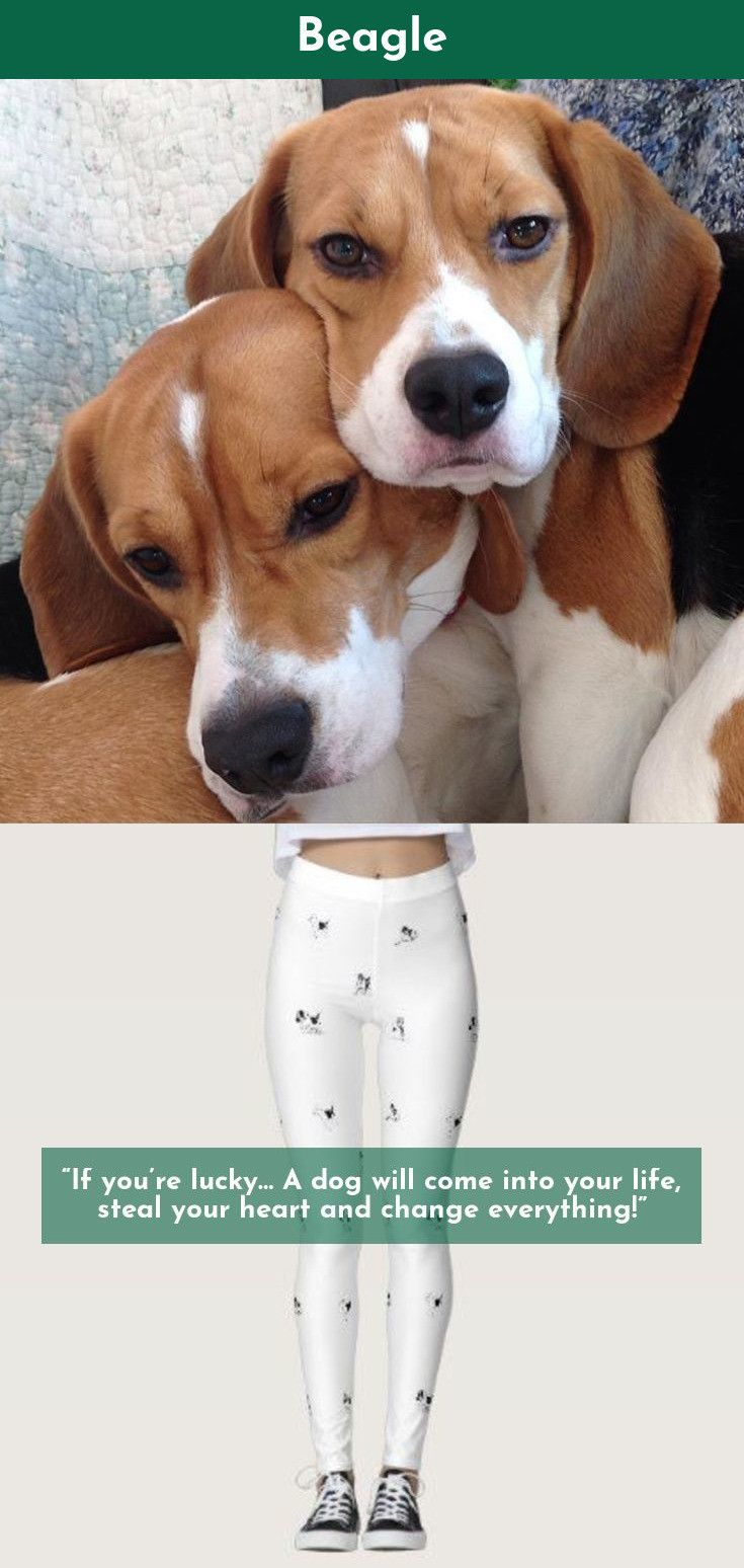 Discover More About Beagles Beagles Check The Webpage To Learn