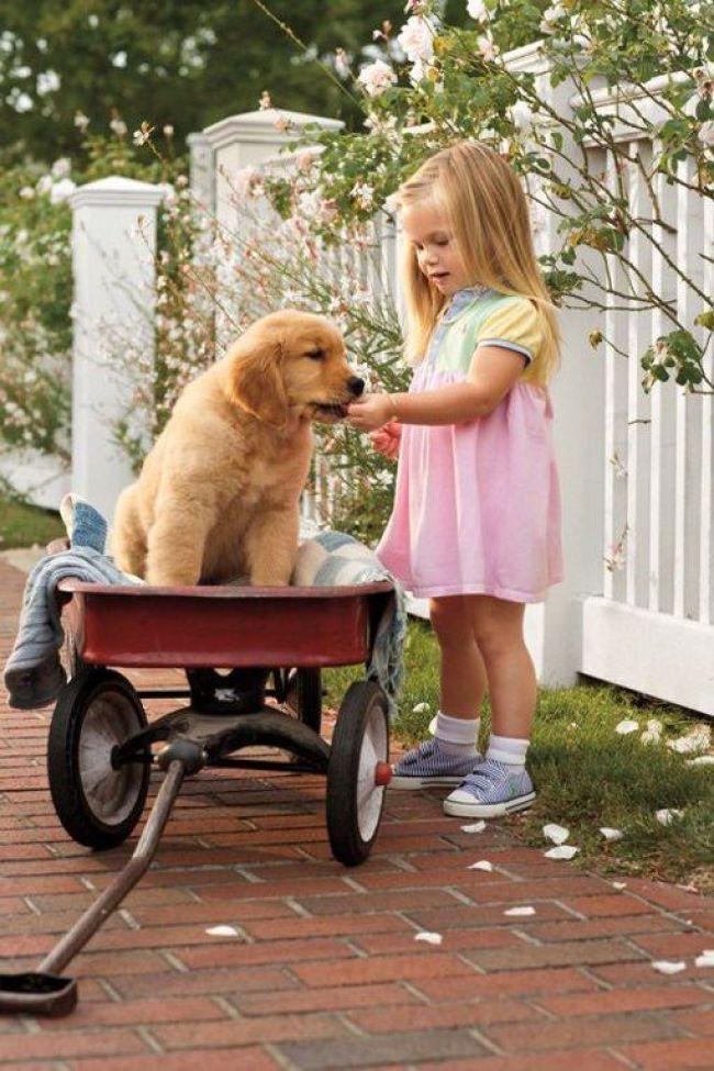 Criança e cachorro de estimação