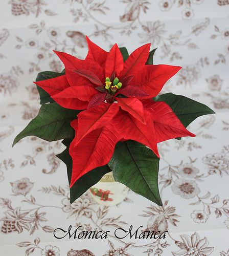 Poinsettia sugar flowers