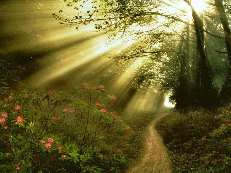 God sometimes removes a person from your life for your protection. Don't run after them. - Rick Warren: Lights, Paths, Nature, Beautiful, Forest, Places, Beauty, Photo