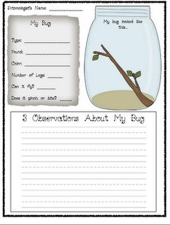 Free Bug Observation Forms for Bug Units.  Observation form, compare/contrast, KWL.
