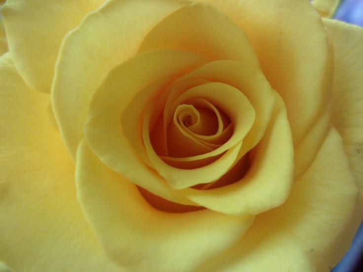 Got flowers for my birthday! Yellow rose.