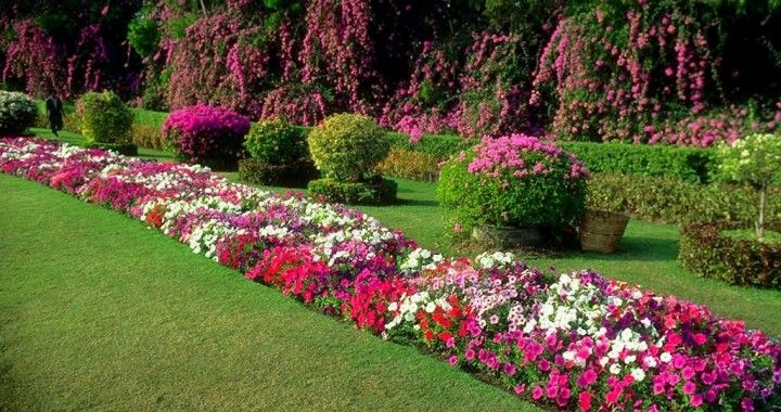 25 best images about dise o de jardines on pinterest un for Disenos para jardines casa