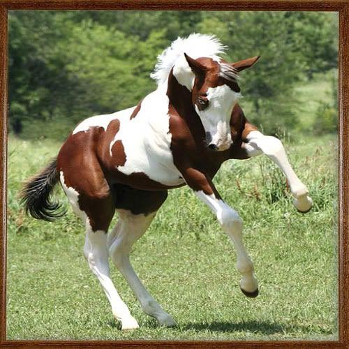 Beautiful Paint HorseBeautiful Foals, Beautiful Hors, Painting Foals, Painting Hors Foals, Amazing Animal, Equine Beautiful, Beautiful Baby, Beautiful Painting Hors, Fiverr Alternative
