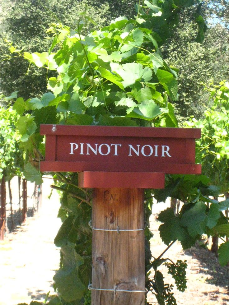 Pin if you like Pinot