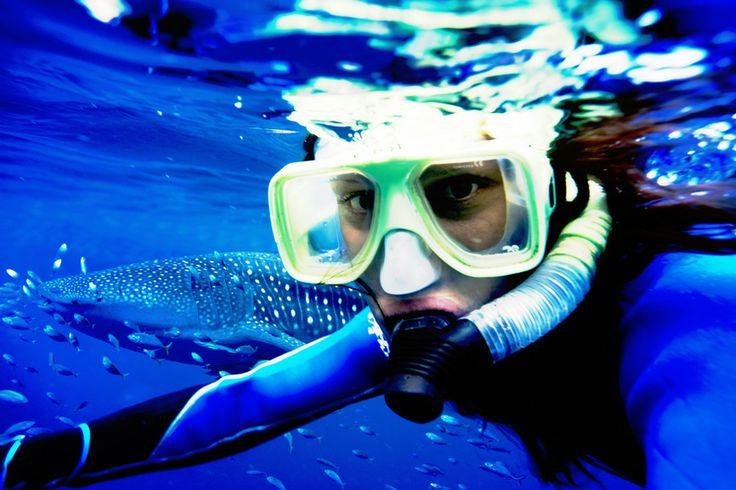 Snorkelling Western Australia Australia Conferences & Incentives