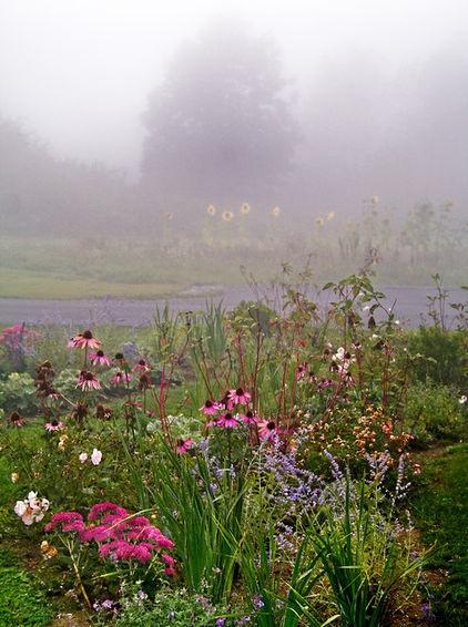 traditional landscape by Matthew Cunningham Landscape Design: Wildflowers, Summer Gardens, Fields Flowers, Landscape Design, Cunningham Landscape, Perennials Gardens, Vegetables Gardens, Traditional Landscape, Wild Flowers