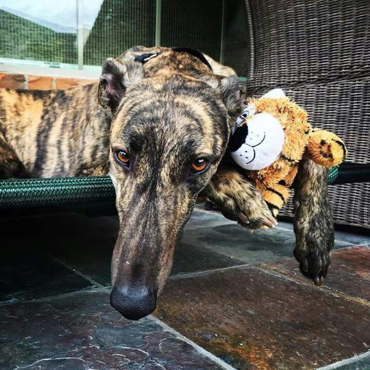 XFactor giving his tiger toy a forever home hug!