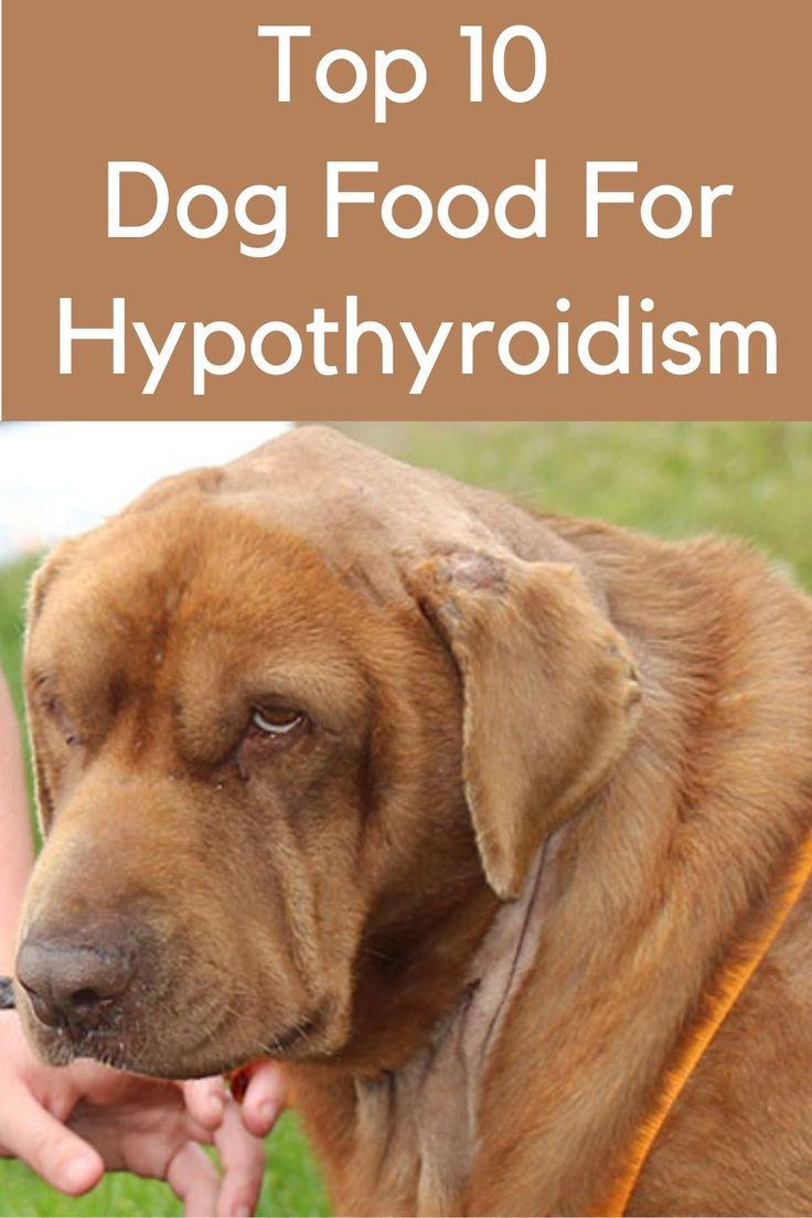 Best dog foods for hypothyroidism hypothyroidism recipes