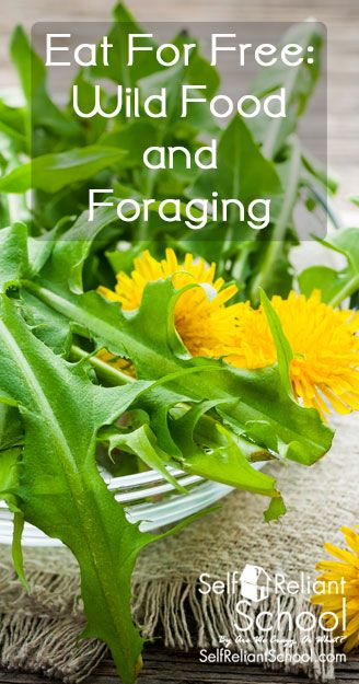 Try foraging uncultivated crops to allow you to get out there and find food for your family that is completely free and hugely abundant. #beselfreliant