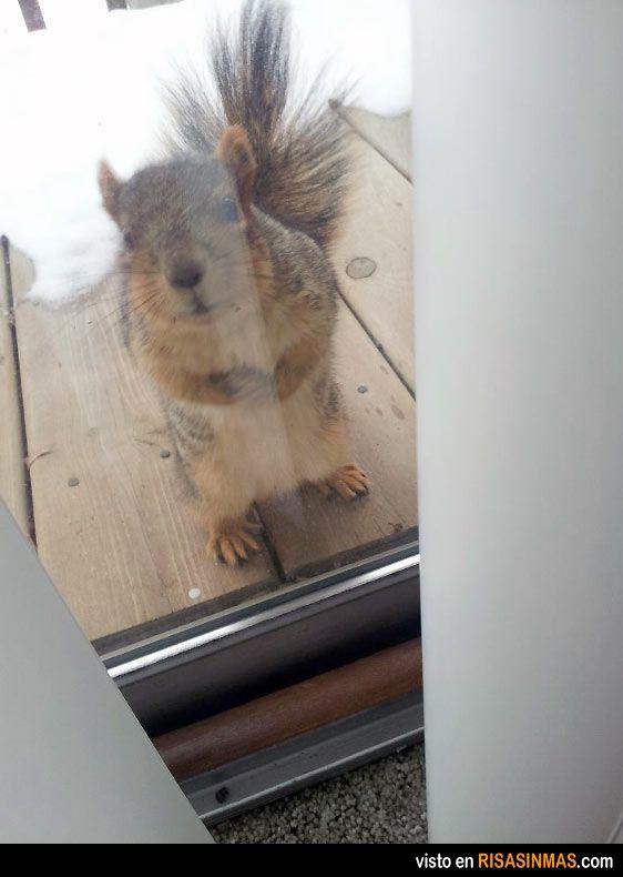 ¿Puedo entrar? Tengo frío.