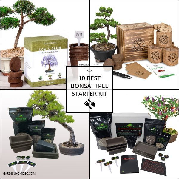 10 Best Bonsai Tree Starter Kit Bonsai Kit Bonsai Tree Mini Bonsai