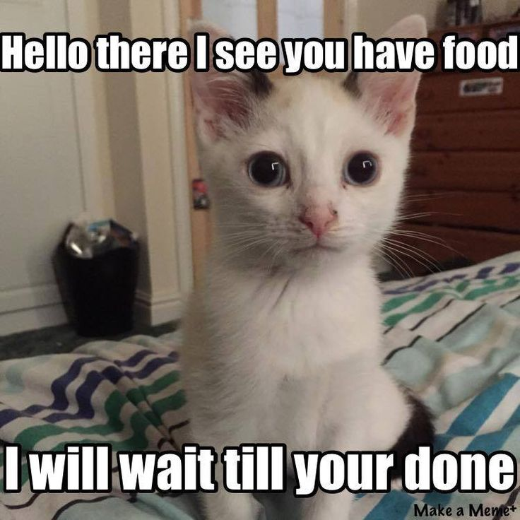 ba4068dd2404f2d829c9ad05d8c5c193 funny cat memes funny cats 207 best cat memes images on pinterest animals, cat memes and,Food Cat Meme