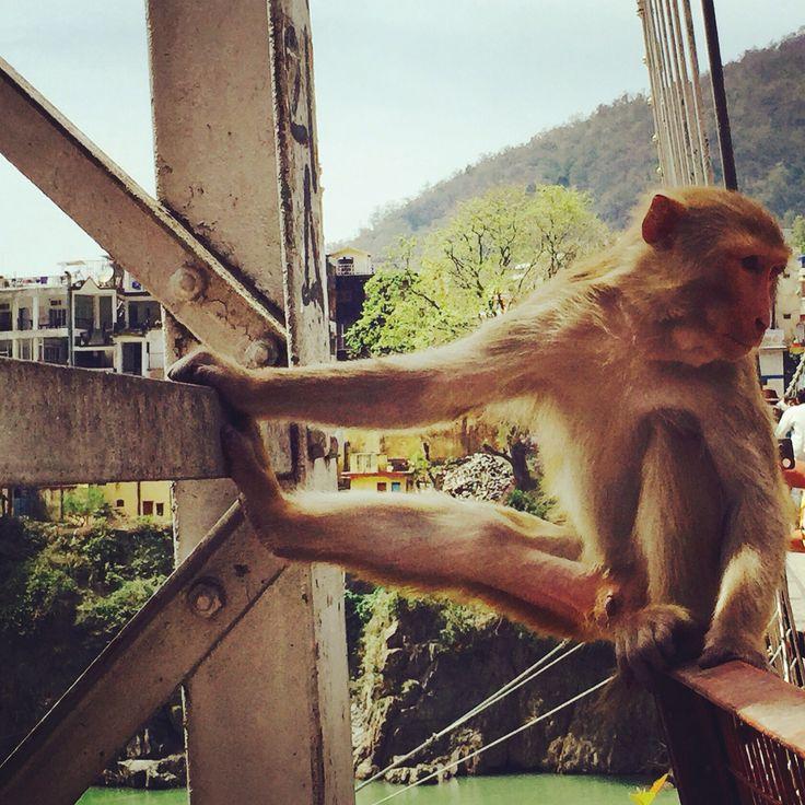 Monkeys everywhere. Rishikesh