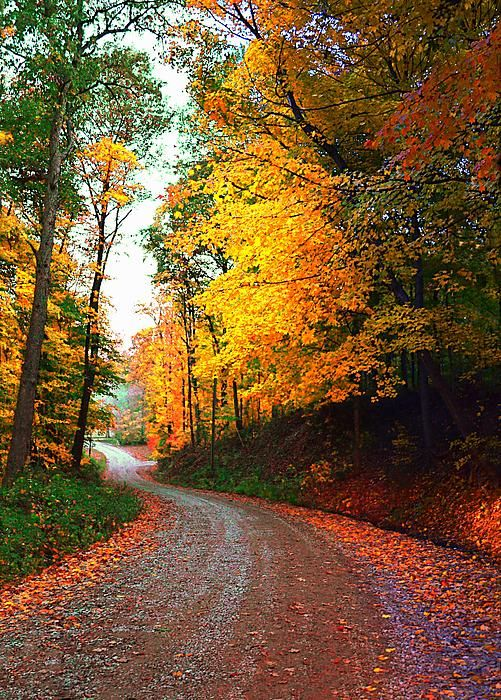 Country Autumn Road - Indiana.  Makes you want to find out where this road will take you.