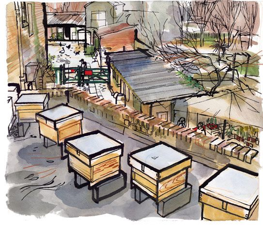 lucinda rogers illustration country living london beehive hackney city farm rooftop