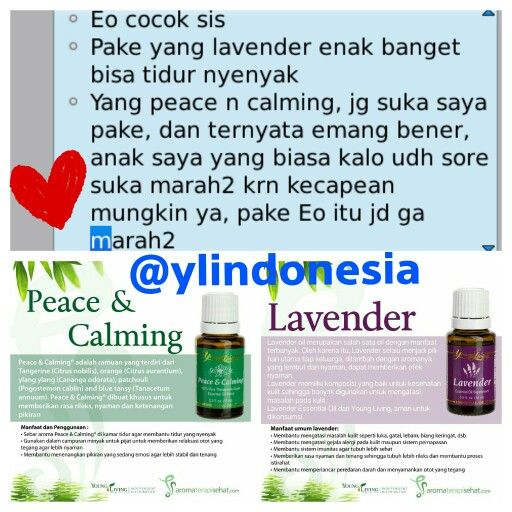 Testi_peace&calming, lavender#testimony lavender youngliving essential oil #testimony peace and calming youngliving essential oil #youngliving #ylindonesia