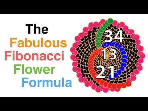 The fabulous Fibonacci flower formula - YouTube