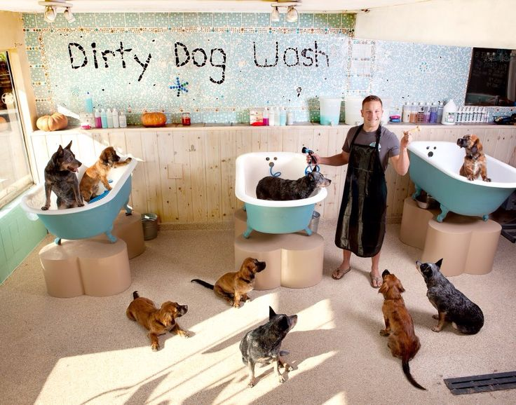 569 best images about pet stuff grooming salon ideas on for A bath and a biscuit grooming salon