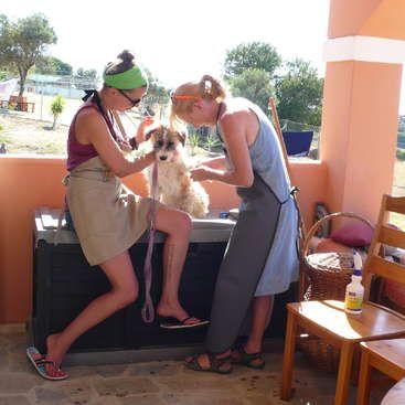 Workaway in Greece. Help an animal welfare organisation on the island of Kos…
