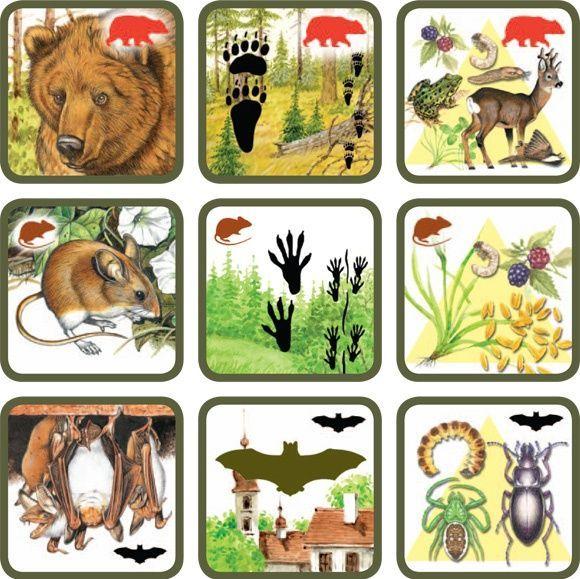 CULTUURHISTORISCH LANDSCHAP Natuurspel voor kleuters, zoek het dier bij zijn sporen en voedsel no.1, free printable