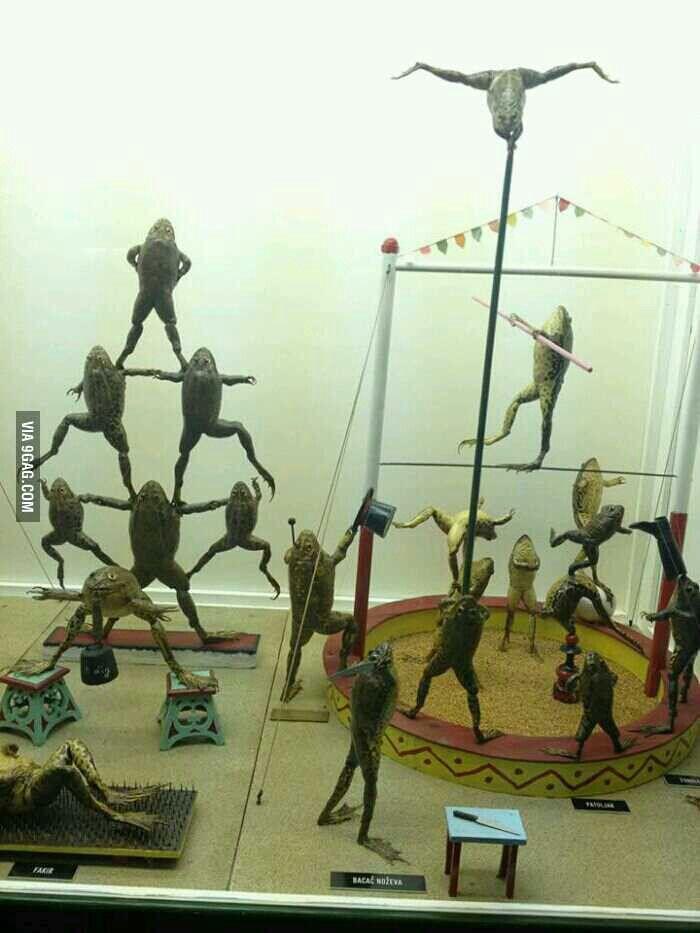 Frog cirque