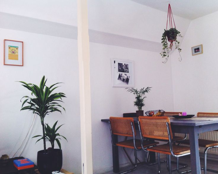 This is my home. #interior #white #plants #thonet #tiger