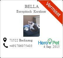 bella/Europäisch Kurzhaar/vermisst