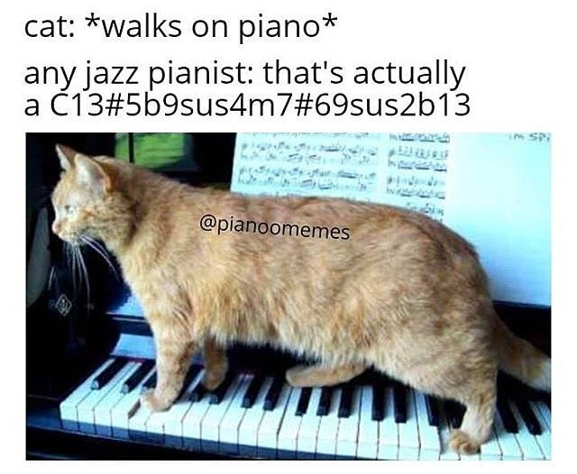 Music Memes On Instagram Follow Badorchestramemes For More Daily Content Orchestra Orchestrameme Musicmeme Cats Funny Animal Memes Music Memes