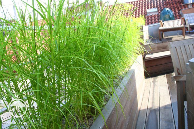 #landcape #architecture #garden #rooftop #terrace