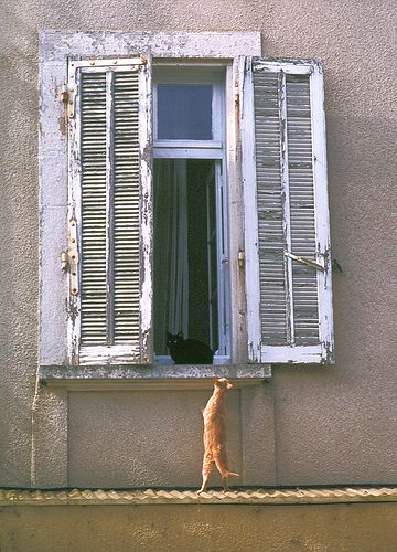 Window with cat, Nyons