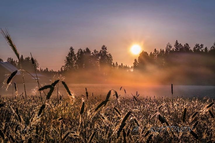Finnish nature year around. © A. Kuittinen
