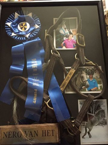 My shadow box of my old horse!