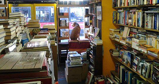 dog in window of bookmongers, brixton second hand bookshop