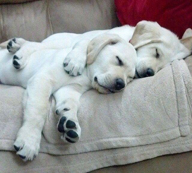 Cuddles More