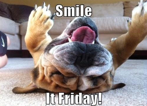ba429b06dec22cff68700c352cc70a33 friday dog funny friday 38 best happy friday dogs! images on pinterest animals, funny,Friday Dog Meme