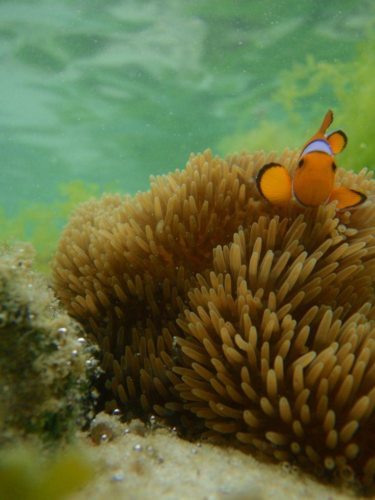 Nemo in action