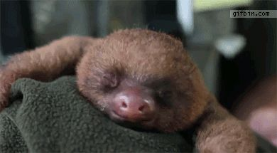 Little sloth yawns and....wait for it....