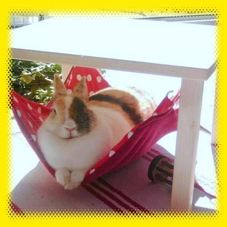 Hängemattengestell mit 1 großen Hängematte für Kaninchen, wird komplett montiert geliefert, zum sofortigen Gebrauch. Die Hängematte ist wendbar und kann be