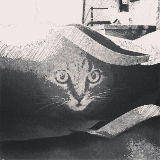 gatti a lapis #1