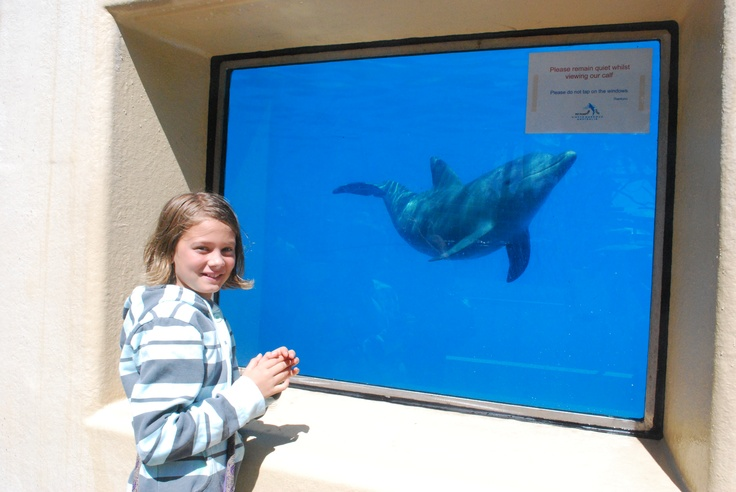 Pet Porpoise Pool.  Dolphin Marine Magic.  Kids Welcome
