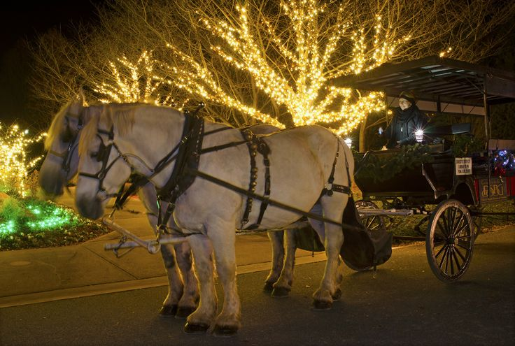 Carriage rides are available on select evenings during Holidays at the Garden 2013, at Daniel Stowe Botanical Garden.